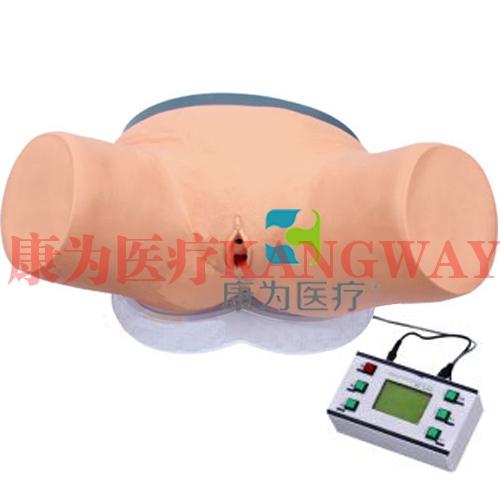 """""""康为医疗""""高级电子女性导尿模型"""