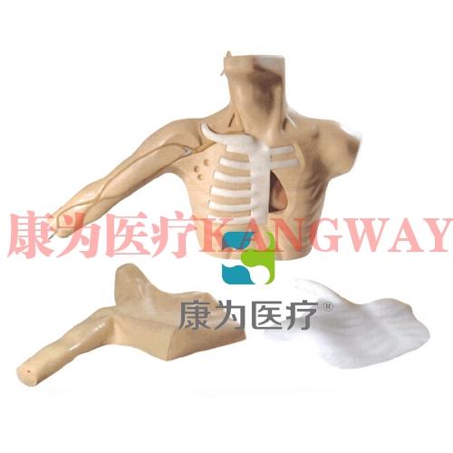 """康为医疗""新型外周穿刺中心静脉插管(PICC)模型 Peripherally inserted central venous catheterization (PICC) model"