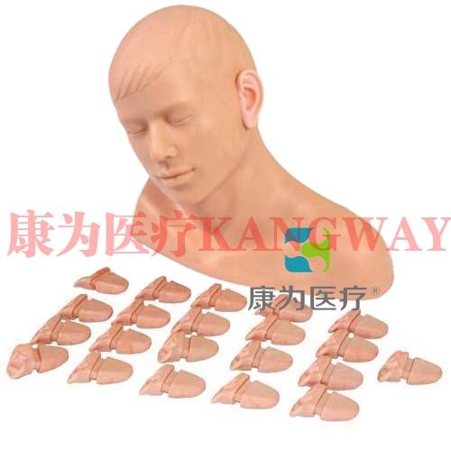 """""""康为医疗""""高级耳内检查模型"""
