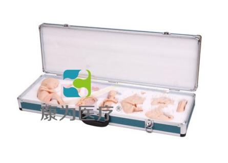 """""""康为医疗""""胚胎发育过程示教模型,胚胎发育示教模型"""