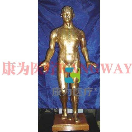 """""""康为医疗""""100cm人体针炙模型"""
