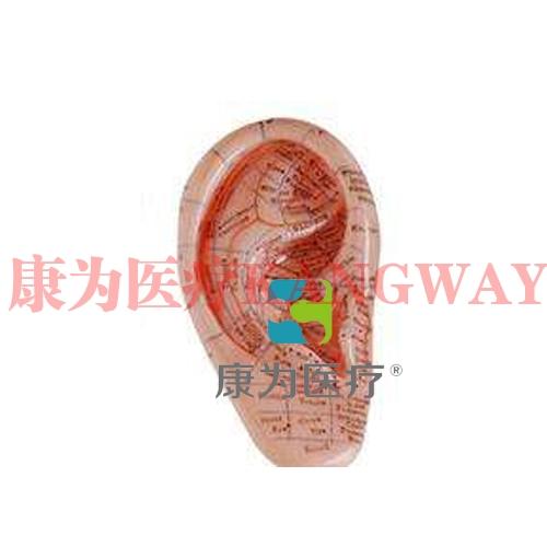 """""""康为医疗""""耳模型12CM"""