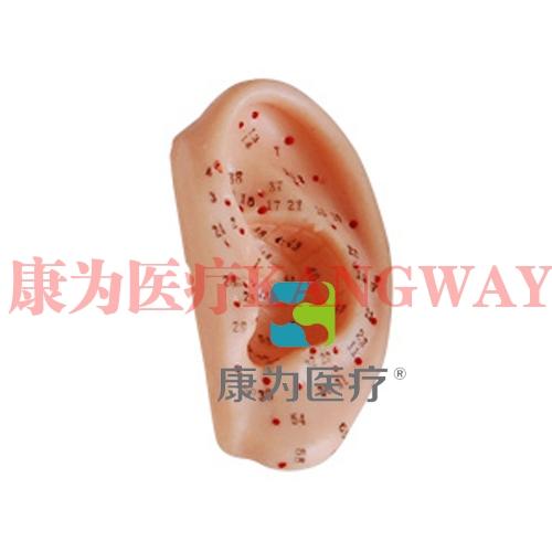 """""""康为医疗""""耳针灸模型13CM"""