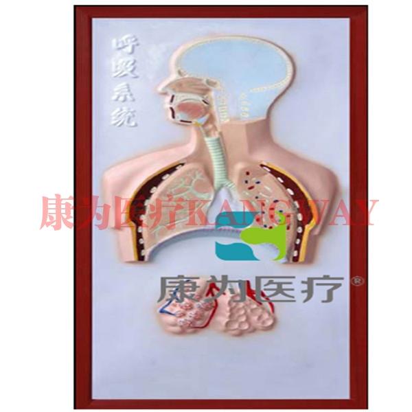 """""""康为医疗""""呼吸系统浮雕模型"""