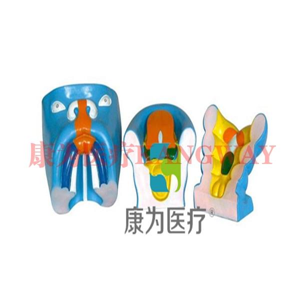 """""""康为医疗""""口腔、鼻及舌的发生(3部件)"""