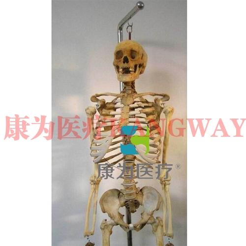 """""""康为医疗""""全身骨骼模型(真尸)"""