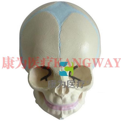 """""""康为医疗""""婴儿头颅骨模型"""