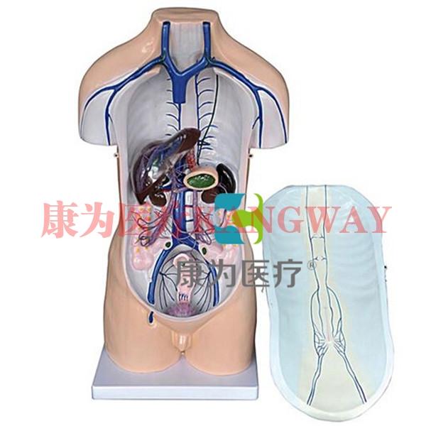 """""""康为医疗""""门静脉系模型"""