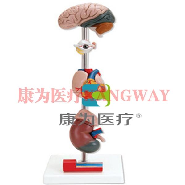 """""""康为医疗""""高血压模型"""