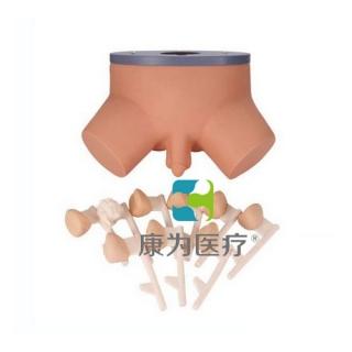 """""""康为医疗""""前列腺病变演示模型,前列腺检查模型,前列腺检查操作模型"""