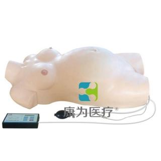 """""""康为医疗""""孕妇产科检查电子标准化病人"""