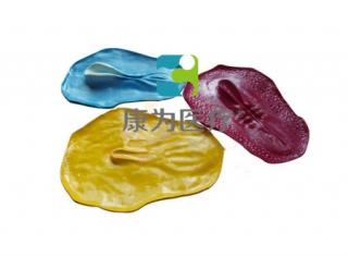 """""""康为医疗""""三胚层发育过程模型,三胚层发育系列模型"""