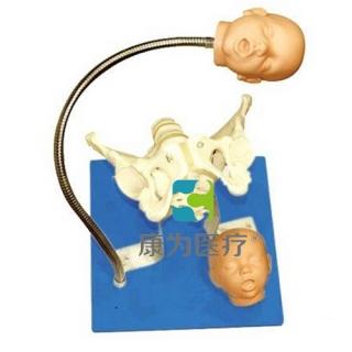 """""""康为医疗""""带有胎儿头的骨盆模型,分娩机制示教模型"""