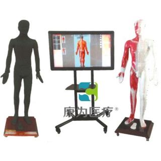 """""""康为医疗""""多媒体人体针灸穴位交互数字平台"""