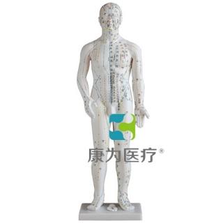"""""""康为医疗""""人体针灸模型48CM"""