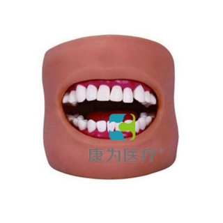 """""""康为医疗""""牙护理保健模型(带脸颊)"""
