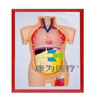 """""""康为医疗""""人体内脏浮雕模型"""