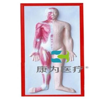 """""""康为医疗""""人体肌肉浮雕万博手机版本登陆"""