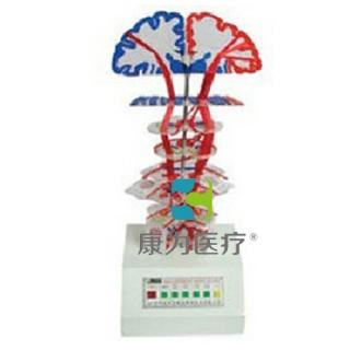 """""""康为医疗""""锥体系(皮质核束)电动模型"""