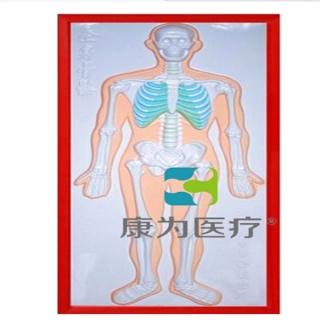 """""""康为医疗""""骨骼系统浮雕万博手机版本登陆"""