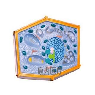 """""""康为医疗""""植物细胞模型"""