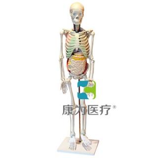 """""""康为医疗""""人体骨骼与内脏关系模型"""