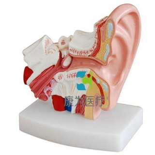 """""""康为医疗""""桌上型耳解剖模型"""