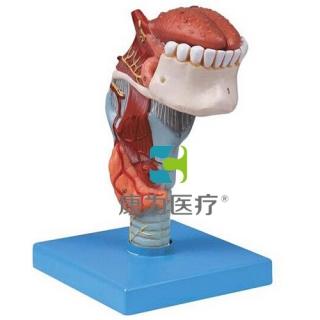 """""""康为医疗""""喉连舌、牙模型"""
