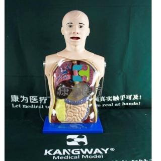 """""""康为医疗"""" 高级鼻胃管与气管护理模型,鼻胃管训练模型"""