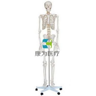 """""""康为医疗""""女性全身骨骼模型"""