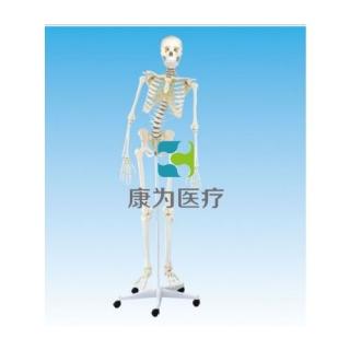 """""""康为医疗""""女性全身骨骼模型(脊柱骨可弯曲)"""
